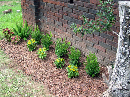 Foundation plants