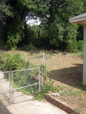 Kudzu field removed