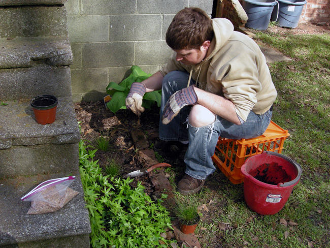 Patrick planting