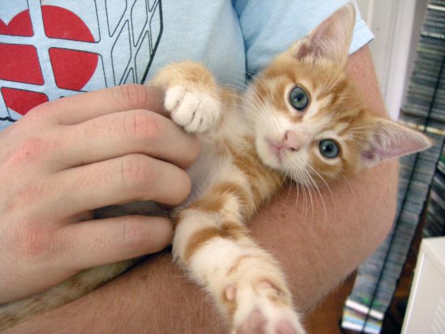 Baby Buster Kitten