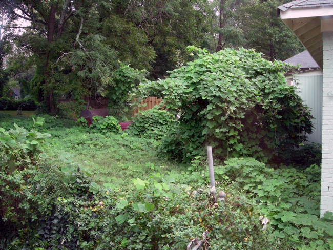 Overgrown kudzu backyard