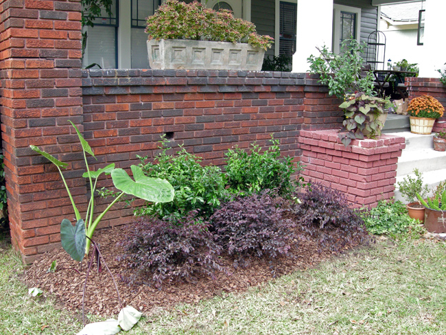 Bungalow foundation plants