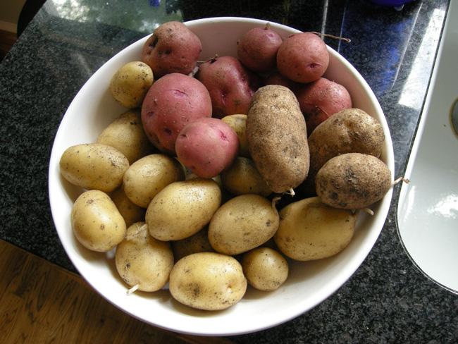 Backyard Garden Potatoes