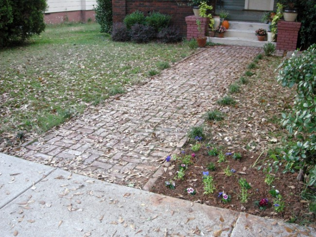 Front yard dianthus