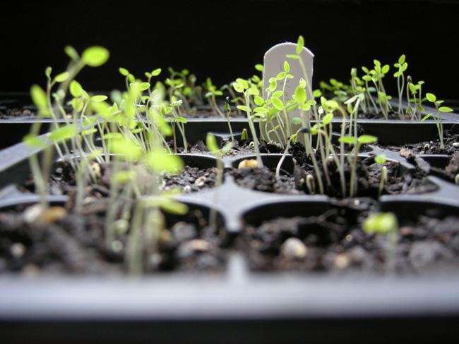 20110703-2011-06-spring-plants2